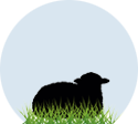 section-sheep-pic1.png